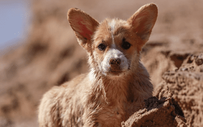 De Chihuahua en Mexico