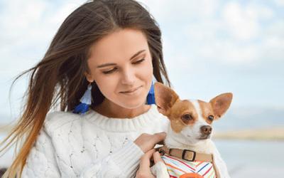 Een Chihuahua kopen